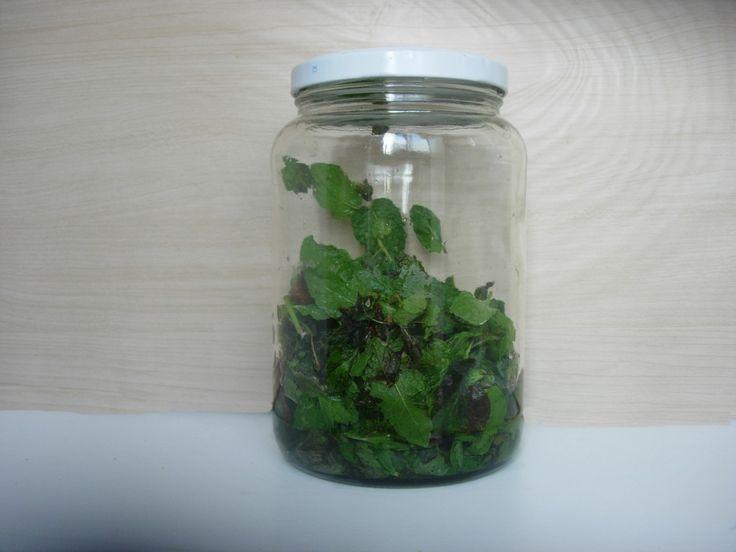 Cómo hacer extractos de plantas medicinales o tinturas