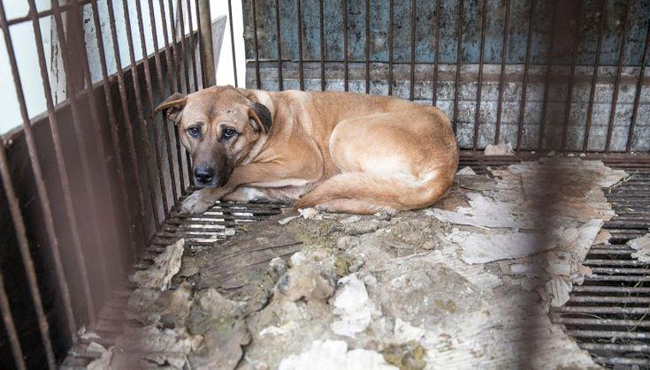 Humane Society International Animal Protection Animals Humane Society