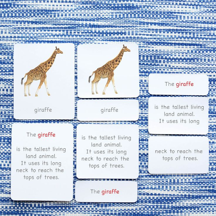 """A diverse but easily recognizable group of 12 different mammals from around the globe, organized in a 5-part card layout. Each image is hand-painted and printable in high definition. This set includes the following mammals:-Bat-Bear-Giraffe-Elk-Monkey-Dolphin-Elephant-Tiger-Wolf-Rabbit-Squirrel-FoxFORMAT: This is a downloadable product. You will need to cut out and laminate the cards before use.Approximate card sizes are 3¾"""" x 4¾"""" (control cards), 3¾"""" x 3½"""" (image cards), and 3¾"""" x 1¼""""…"""