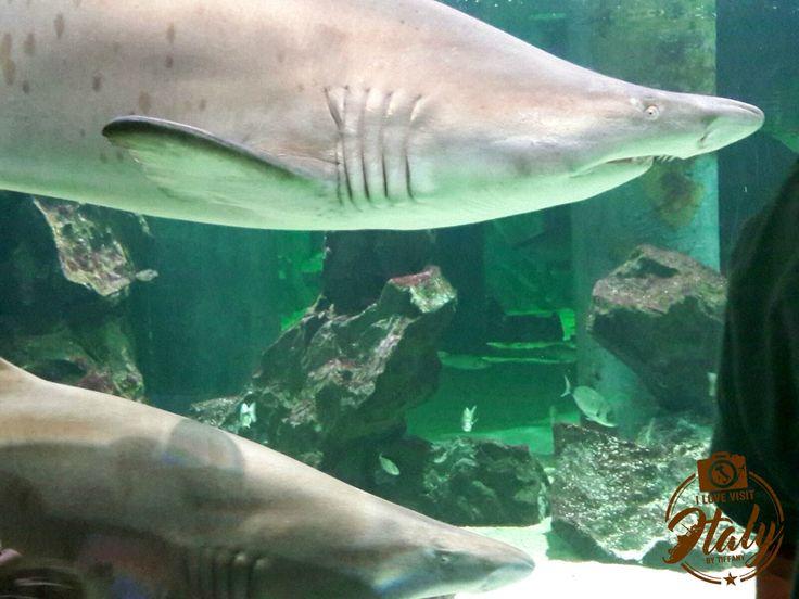 Lifestyle, Travel, food,Shopping,Italy   Acquario di Cattolica: quattro percorsi ed un incontro ravvicinato con gli squali   http://ilovevisititaly.com