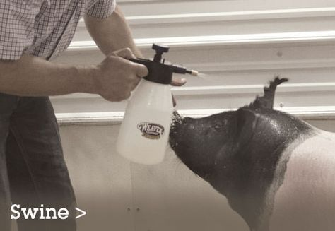 ProTips. Welcome to our library of videos featuring ProStaff team members. Whether you show cattle, sheep, goats or swine, you'll learn tips and tools for getting the most out of our products so you can get the best out of your animal!