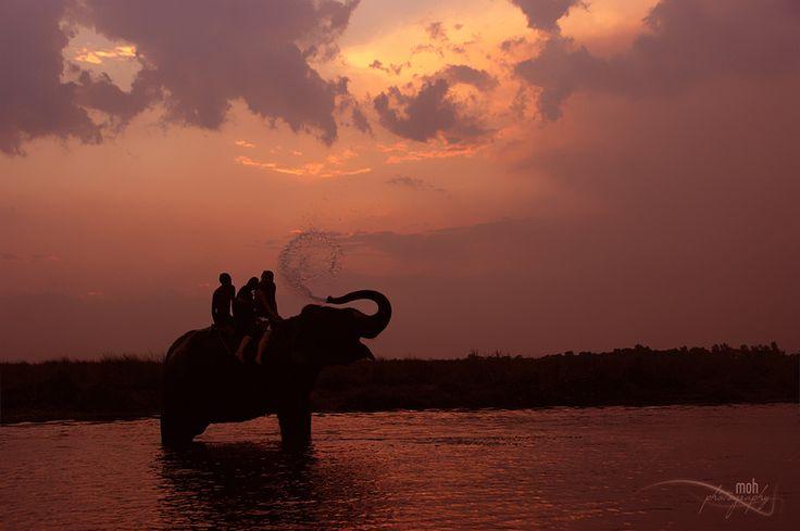 Elephant Bath by Mohan Duwal.Taken in Sauraha, Chitwan National Park, Nepal