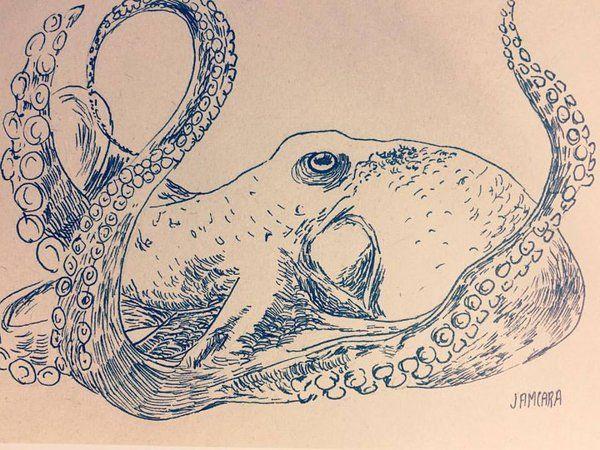 octopus sketch by Jamcara  #sketch #sketchbook # sea #dibujo #drawing #pulpo #octopus #draw #lapicero #pen #ink