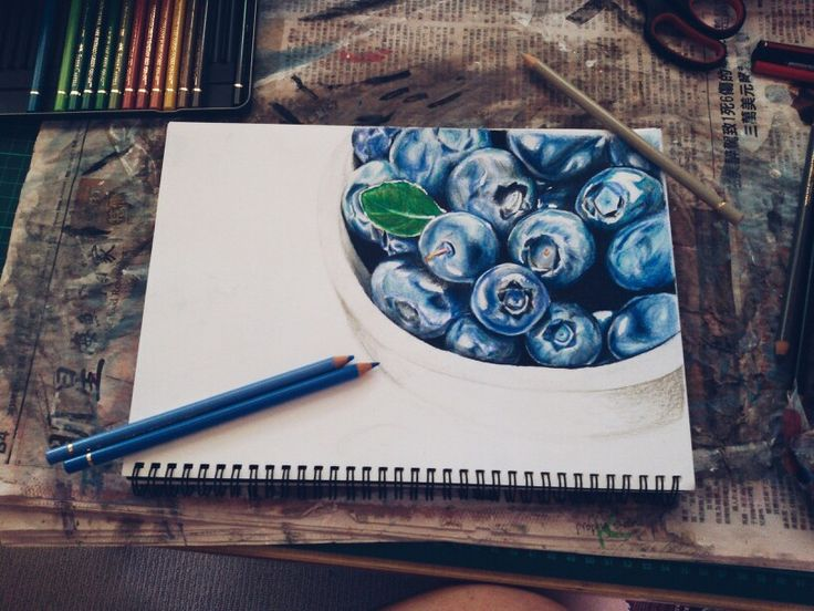 Coloured pencil drawing of blueberries