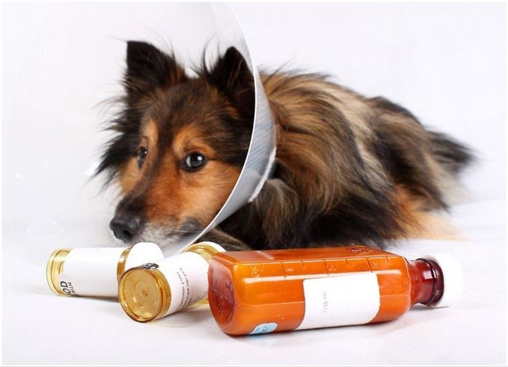 Medicines for dogs and diseases in dogs. Correct dosage per pound for cats and dogs.
