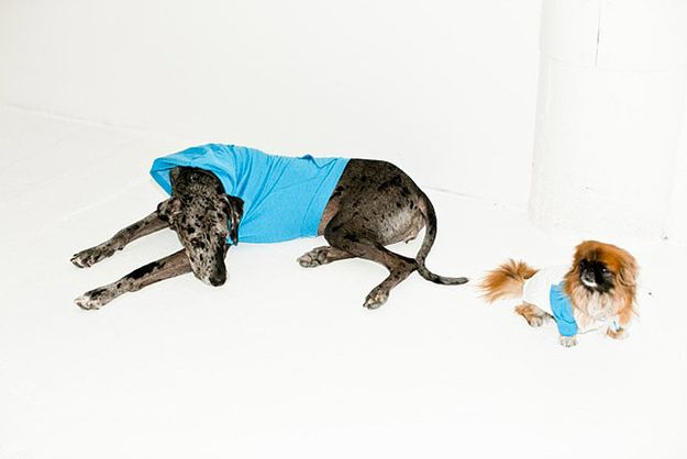 American Apparel: Where the dogs wear clothing and the women do not. | The 28 Raciest American Apparel Ads Ever