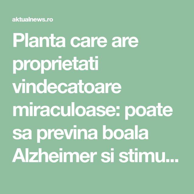 Planta care are proprietati vindecatoare miraculoase: poate sa previna boala Alzheimer si stimuleaza cresterea parului! - aktualnews.ro