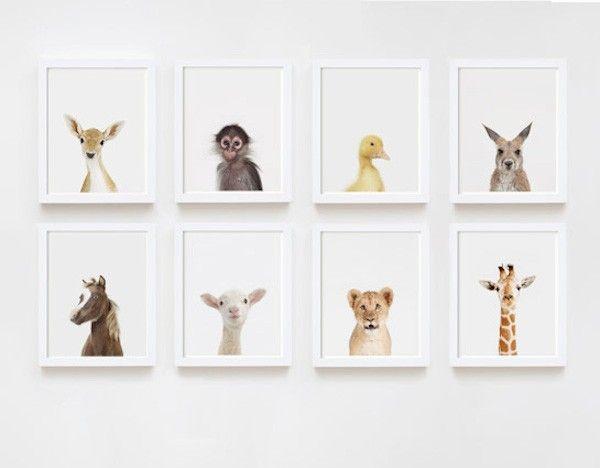 The Animal Print Shop Framed Animal Prints