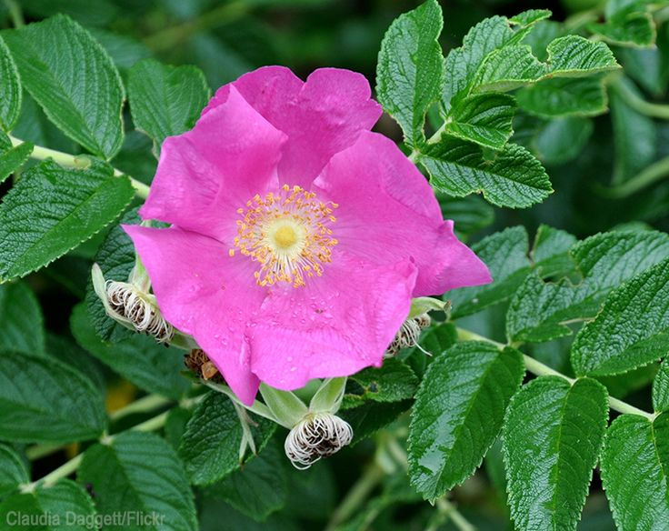 297 best gardening permaculture nature images on pinterest permaculture gardening tips and - Rose cultivars garden ...