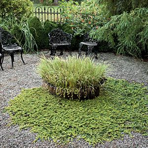 Let your plants spill out of their container. A generous planting of golden variegated sweet flag (Acorus gramineus 'Ogon') fills this kettle, with golden creeping Jenny (Lysimachia nummularia 'Aurea') trailing out and onto the gravel below.    86 Creative Container Gardens | Sweet Flag & Creeping Jenny | SouthernLiving.com