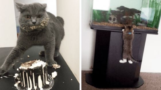 Gatos pegos no flagra aprontando algo!