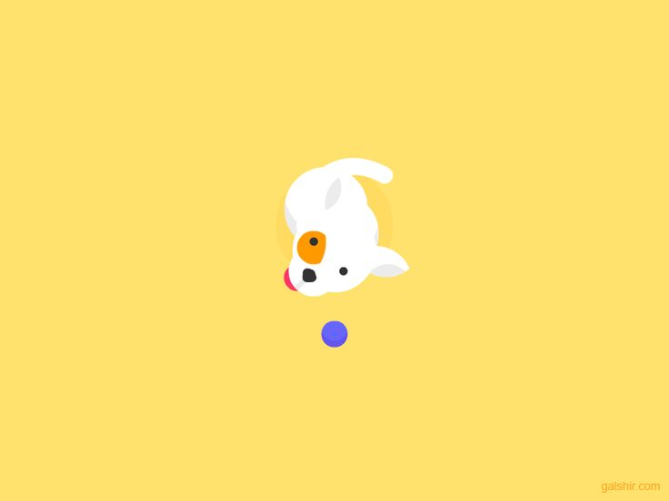 This is my dog, Meshi! by Gal Shir.