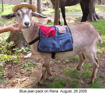 The goat's idea to dress as Minnie Pearl for Halloween was inspired, but what really impressed everyone were his sewing skills!