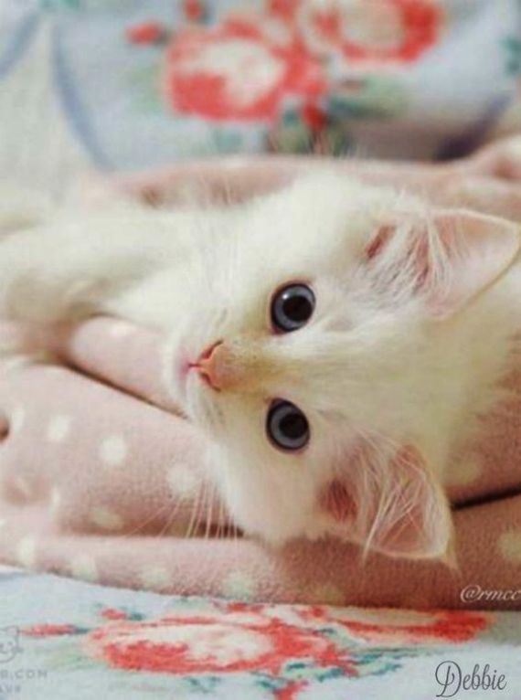 Beautiful Cats Cell Beautiful Cats Wallpapers For Mobile With