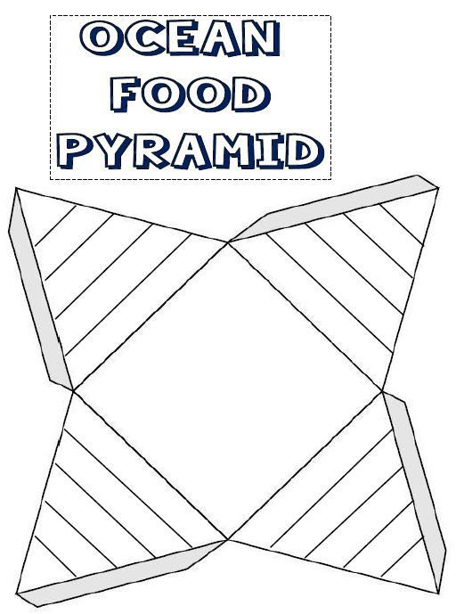 ocean food pyramid template for lapbook or notebook page oceans