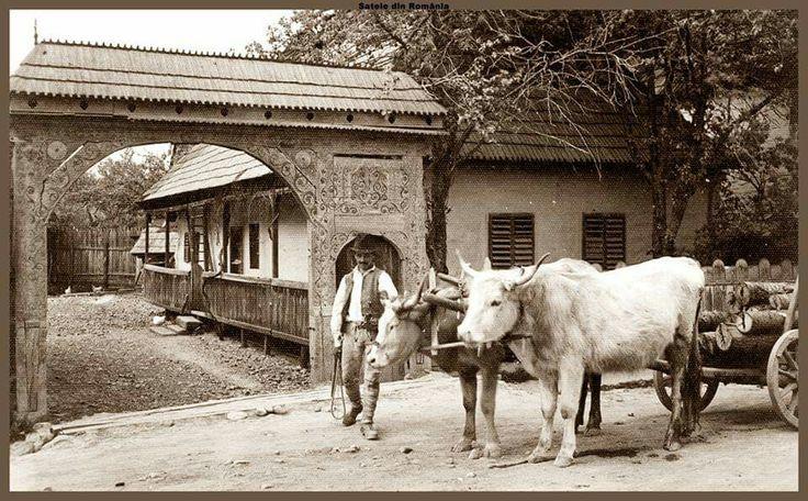 Taran cu car cu boi.1939