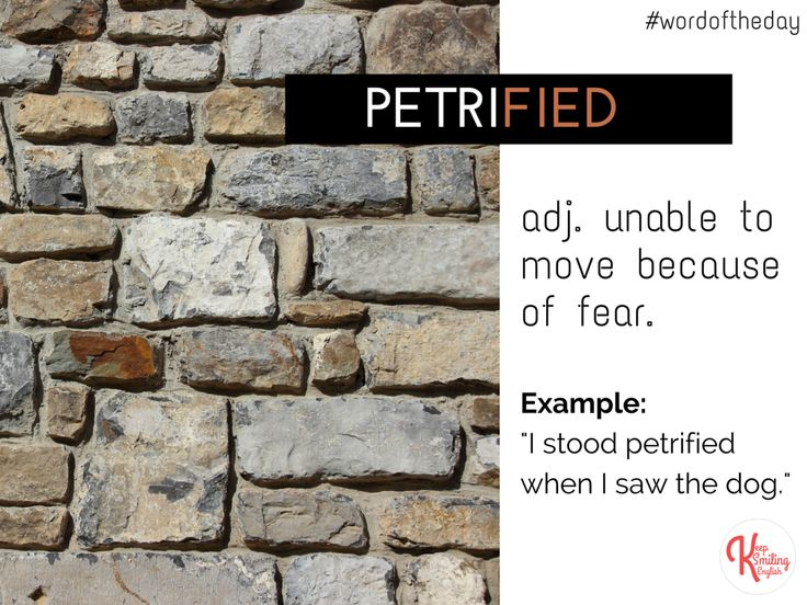 Word of the Day: PETRIFIED