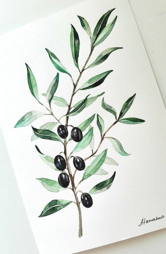 Olive Branch Painting Olives Watercolor Original Watercolor