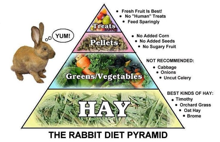 104531987005100ba0ead5afb9951807 rabbit diet rabbit food