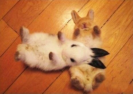 Bunday: Hot Cross Buns~Aww! RunnyBabbits!!! :)