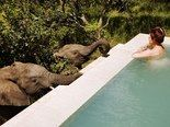 Hoedspruit, South Africa    Hands down, the coolest amenity at the Royal Malewane Private Game Lodge is their private plunge pools that come with each room. While soaking in the South African sun, an elephant or two just might drop by. Located on the private game reserve across from Kruger National Park, the lodge offers a unique game viewing experience—if not from your own hotel room, then on a guided safari through the surrounding bush.