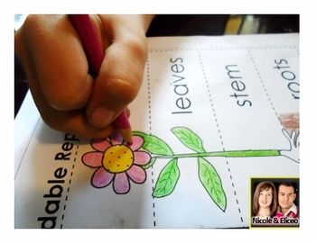 "Fun ""Foldable Plant Report"" activity for elementary science!"