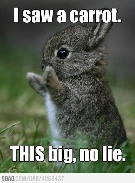 I completely believe you, darling little bunny. #cute #animals #rabbit #lol