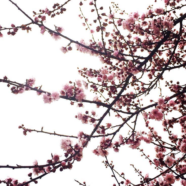 Flores en día nublado