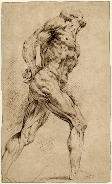 Peter Paul Rubens - anatomical studies.  Art Experience NYC  www.artexperiencenyc.com/social_login/?utm_source=pinterest_medium=pins_content=pinterest_pins_campaign=pinterest_initial
