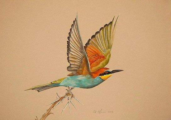 This is a very simple art piece but also very complex as the bird looks real. Animals are very good to dark and add lots of colour as well as making them look life like