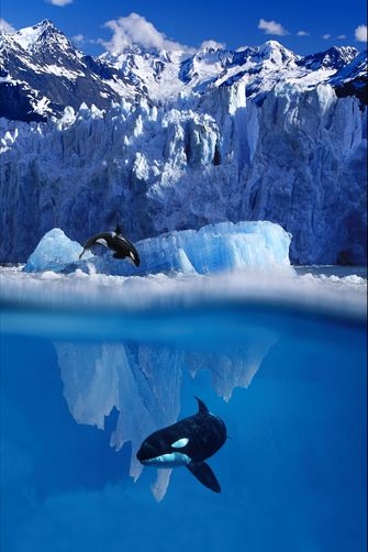 Orca Jumping Out of Water and Under Iceberg Composite/nAlaska by Alaska Stock Images