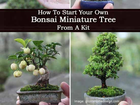 How To Start Your Own Bonsai Miniature Tree From A Kit Bonsai Tree Care Miniature Trees Bonsai Tree Types