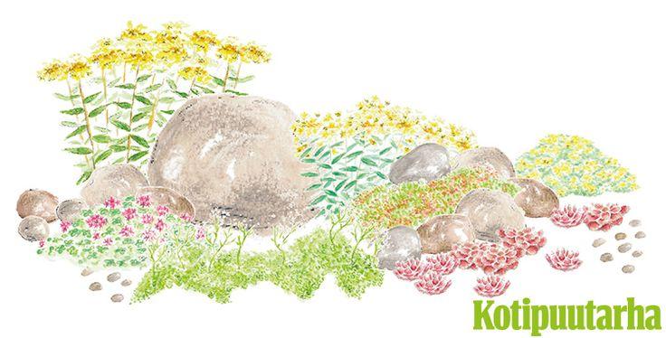KUIVA KOHTA KUKKIMAAN. Hurahda paahteisen paikan kasveihin ja toteuta maksaruohoistutus, joka kukkii kesäkuusta elokuun loppuun. Istutuksen kasvit: Kamtšatkanmaksaruoho (Sedum kamtschaticum), lyydianmaksaruoho (Sedum lydium), valkomaksaruoho (Sedum album), kaukasianmaksaruoho (Sedum spurium), särmämaksaruoho (Sedum sexangulare), kivikkomehitähti (Sempervivum-risteymä), siperianmaksaruohoa (Sedum aizoon).