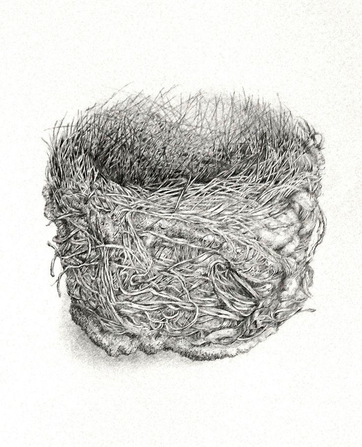 Noisy Friabird nest graphite drawing Artist Sandi Rigby
