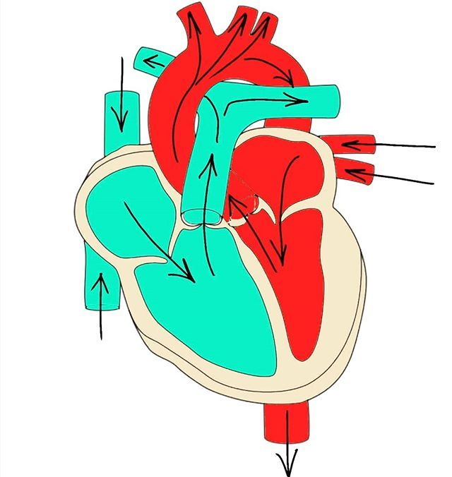 Can you label this heart diagram and identify key blood ...