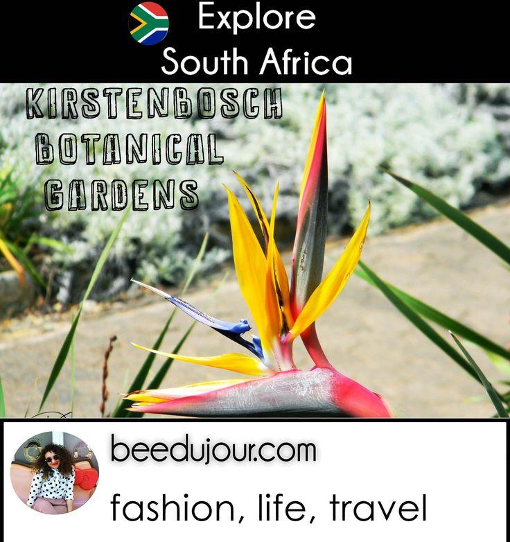 The Kirstenbosch Botanical Gardens · Bee Du Jour