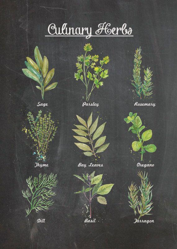 chalkboard herbs artwork | Culinary Herbs Chalkboard Wall Poster Decor. Watercolor Food Art ...
