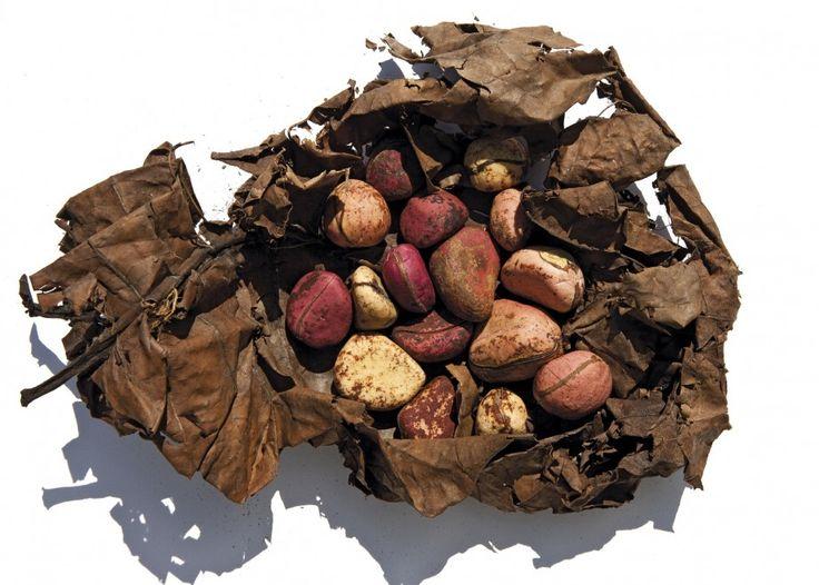 Oliviero Toscani e Slow Food: i cibi in estinzione dai quattro angoli della terra