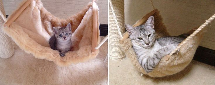 "* * "" Dis hammock haz served meez well....from a kitten to a cat - me likes dat."""