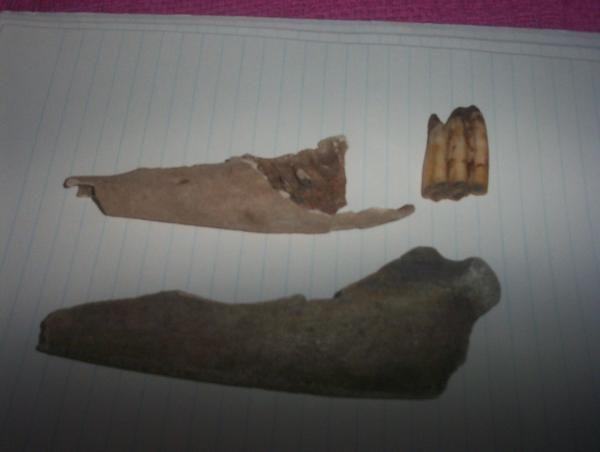 Photos from Marcus Knight (fossildude) on Myspace