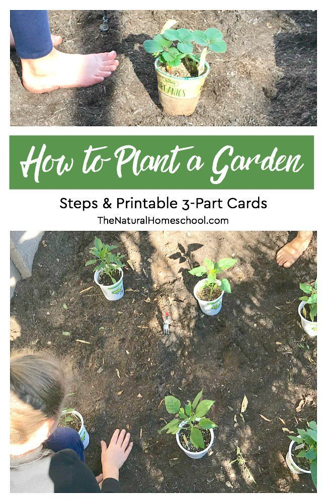 How To Plant A Garden Steps Printable