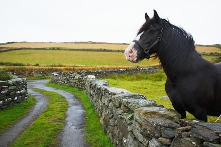 Horseback riding in the English countryside