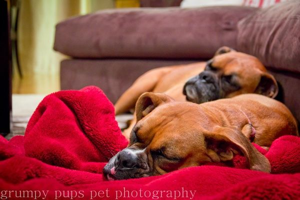boxers. Such lovers and cuddlers!
