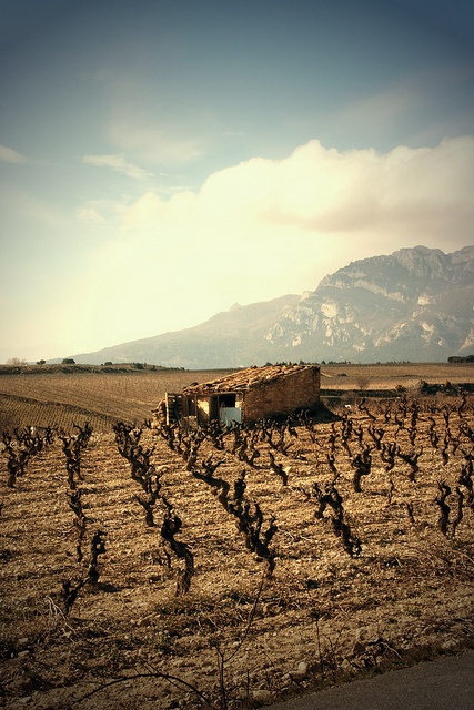 La Rioja, wine country, Spain