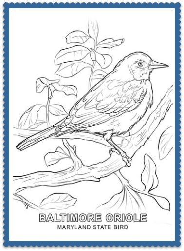 maryland state bird coloring page print or color online baltimore oriole
