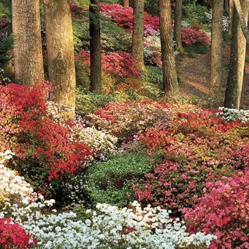 1000 images about callaway gardens ga on pinterest - Callaway gardens pine mountain georgia ...
