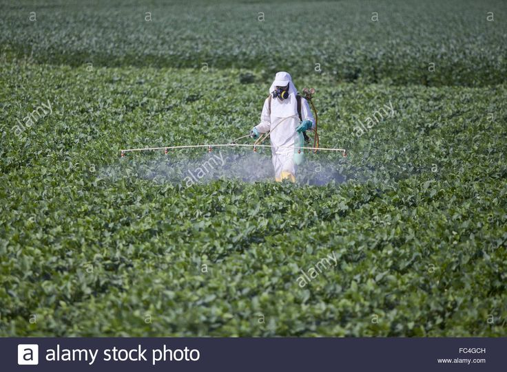 Download this stock image: Rural worker spraying pesticides experimental area of soybean in the countryside - FC4GCH from Alamy's library of millions of high resolution stock photos, illustrations and vectors.