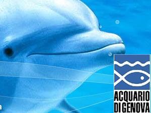 #Genoa #Aquarium (Loano-Genoa: km 85)- L'#acquario di #Genova a 85km di distanza da Loano è un'attrazione ideale da visitare sia d'estate che d'inverno. Per informazioni ed orari http://www.acquariodigenova.it/