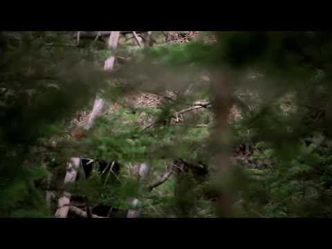 ▶ Todd Standing Bigfoot video as seen in Survivorman Bigfoot show with Les Stroud - YouTube