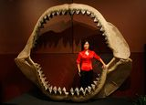 Enya Kim, from the Natural History department at auctioneers Bonhams & Butterfields, stands in one of the world's largest set of shark jaws (comprised of about 180 fossil teeth) from the prehistoric shark Carcharodon megalodon, which grew to the size of a school bus.